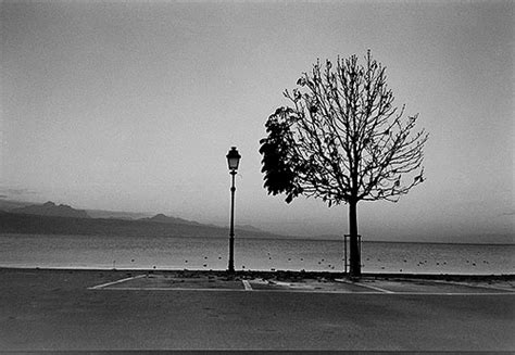 imágenes tristes en blanco y negro arbol blanco y negro imagui