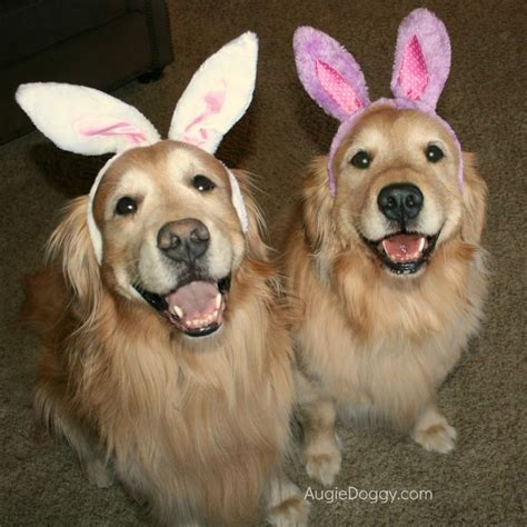 golden retriever costume for humans 180 best images about golden retriever costumes on