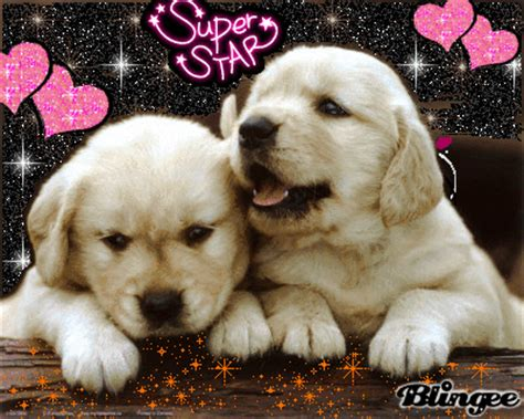 pretty puppies pretty puppies picture 117385532 blingee
