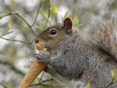 the news for squirrels on the second day of squirrel