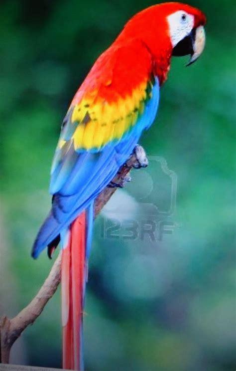 las aves exticas mi 8408127950 como pintar loros de ceramica buscar con google chsvelyceramicas b 250 squeda y