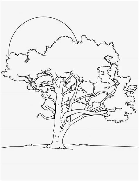 tulip tree coloring page free coloring pages of tulip poplar tree