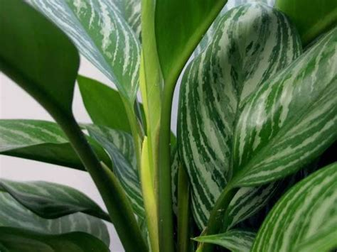 green house plant identification how to identify green house plants with pictures ehow
