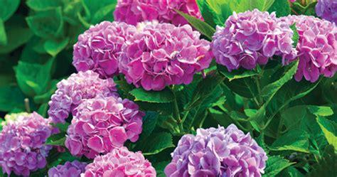 flowers and shrubs for sun 5 flowering shrubs for your buffalo landscape