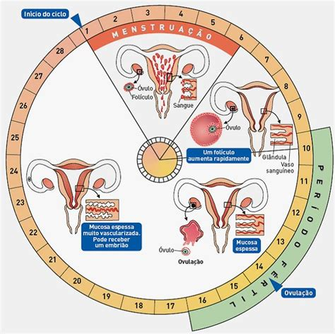 Calendario De Menstruacion Y Dias Fertiles Como Calcular O Ciclo Menstrual