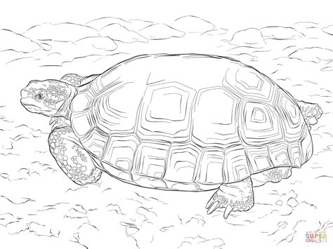 desert turtle coloring page agassizs desert tortoise coloring page free printable