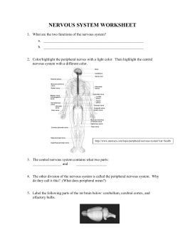 section 49 1 review neurons and nerve impulses studylib net essys homework help flashcards research