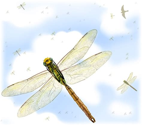 dragonfly migration map pictures to pin on pinterest