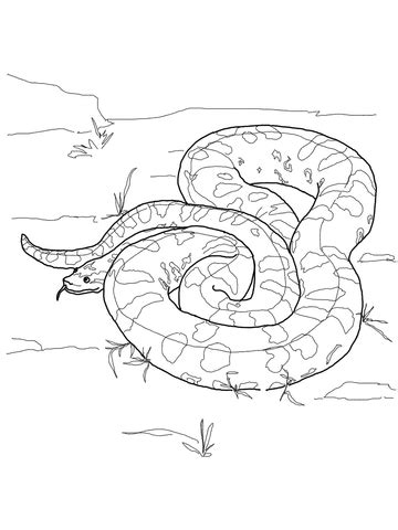 green anaconda coloring page supercoloringcom