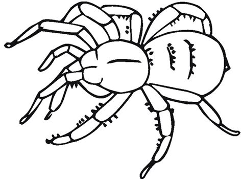 spider template spider shape template 55 crafts colouring pages