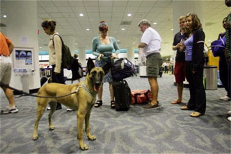 Jo In Dogs Out Kettle Intl how bomb sniffing dogs work howstuffworks