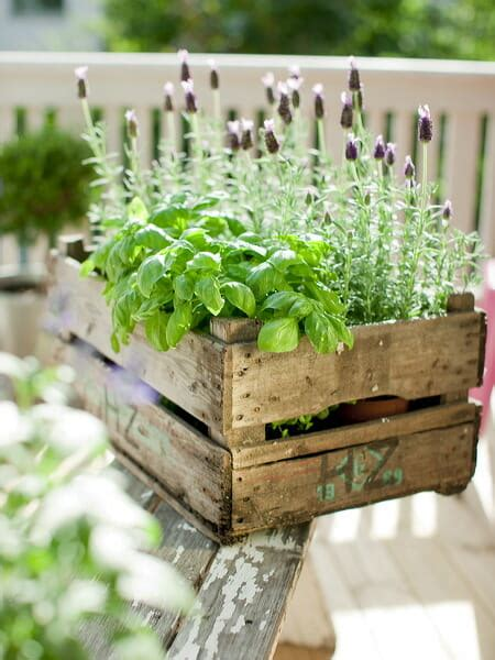 herb boxes how to plant out a herb garden