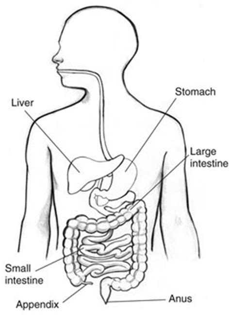 appendicitis location diagram what side is the appendix on new health guide