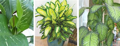 indoor plants that don t need much sun houseplants what are some low maintenance plant choices