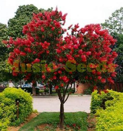 popular red flower trees buy cheap red flower trees lots from china red flower trees suppliers