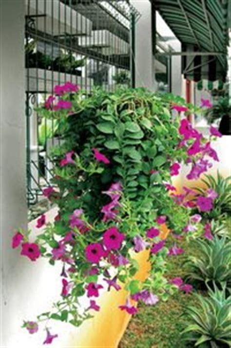 Lu Hias Untuk Taman gaya hidup dan kesehatan keluarga modern hijau dengan pot