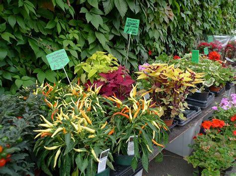 vivai piante da giardino vivai piante piante annuali piante nei vivai