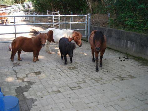pony stall ponystall 7 jpg