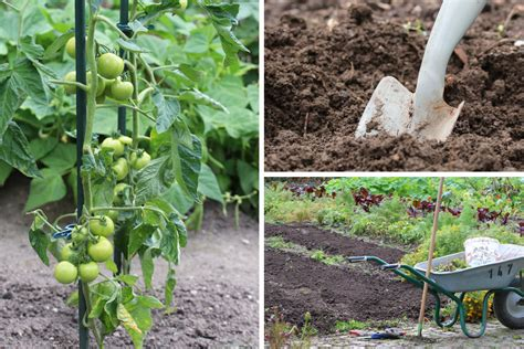 Wann Tomaten Pflanzen Tomaten Pflanzen Balkon Wann Innenr