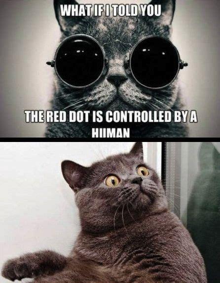 Morpheus Cat Meme - 20 best morpheus memes images on pinterest ha ha funny