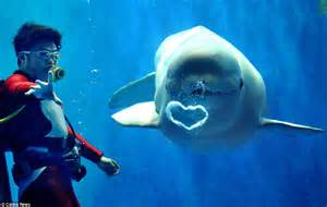 valentine s day wildlife pictures show love really is all around in the animal kingdom daily