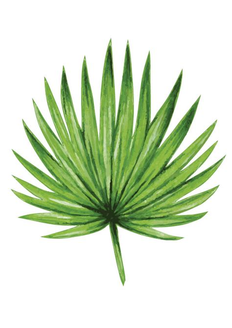 printable pictures of palm leaves fan palm leaf print rachelle rachelle