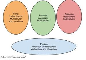 section 21 2 classification of fungi f f info 2017