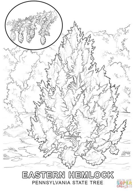 pennsylvania state tree coloring page free printable