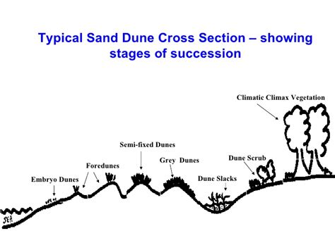sand dune cross section succession lesson1