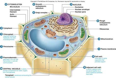 sel tumbuhan  fungsinya lengkap penjelasan gambar