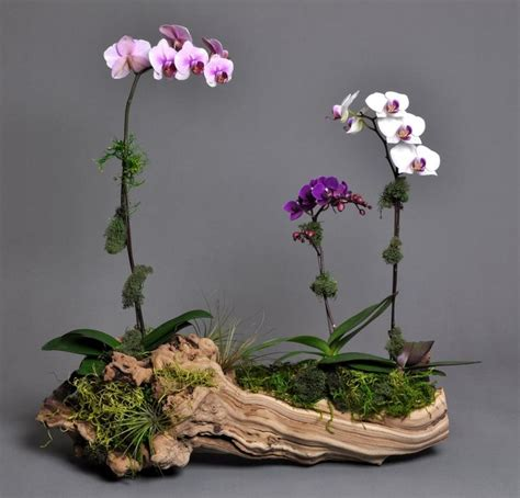 Orchid Planter Ideas by Container With Orchids Container Gardening