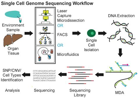 rna sequencing workflow single cell sequencing