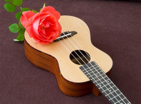 imagenes de guitarras rojas fondos de pantalla 2409x1780 rosas guitarra rojo flores