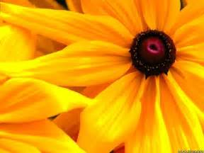 wallpaper with flowers flowers wallpapers yellow flowers wallpapers