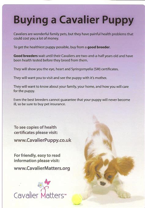 cavalier puppy  companion cavalier king charles