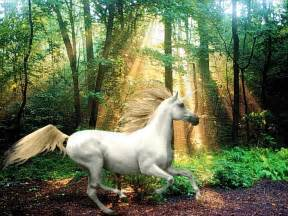 Photo Realistic Wall Murals unicorn pictures horse photo web