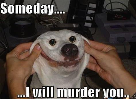 Dog Laughing Meme - fluffy dog memes image memes at relatably com