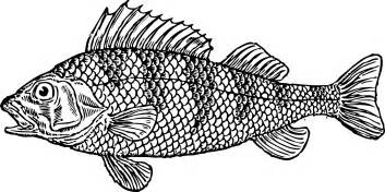 black white pictures fish cliparts