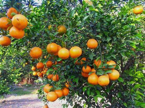 Orange Garden by Hotel R Best Hotel Deal Site