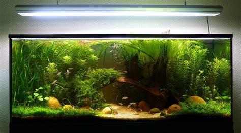 Mon Aquarium 54l Communautaire Plantes Pour Betta En 54l Forum Plantes