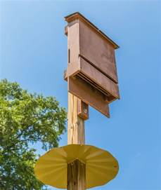 Plans For Bat Houses Use Bat Houses For Mosquito Nature And Environment Earth News
