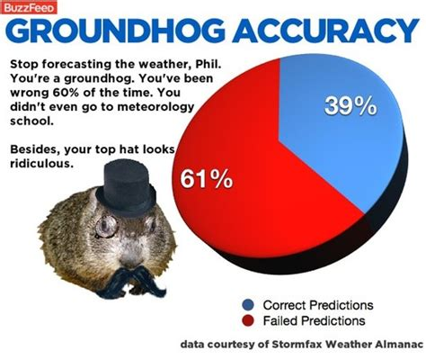 groundhog day just put that anywhere punxsutawney phil predicts news article