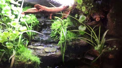 paludarium waterfall update  frog youtube