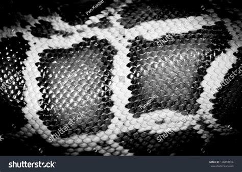 snake pattern black and white boa snake reticulated python pattern black stock photo