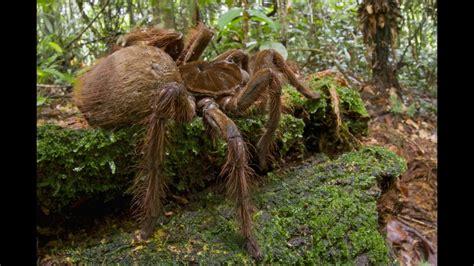 film petualangan di hutan amazon inilah hewan paling berbahaya di hutan amazon youtube