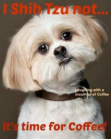 we shih tzu not i shih tzu not it s time for coffee coffee coffee and shih tzu