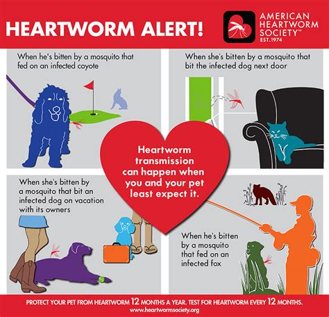 heartworm prevention brevard aid to animals flea tick and heartworm prevention