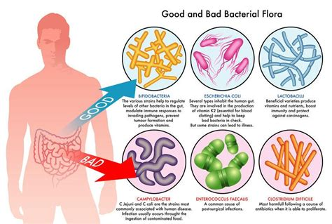 How To Detox Gut Bacteria by Causes Of Leaky Gut In Adults Children In