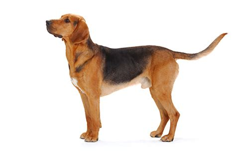 puppy profile image gallery standing