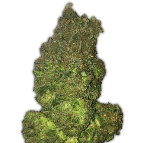 fruit punch tree fruit punch auto by heavyweight seeds seedfinder